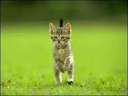 gato bipedo.jpg