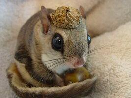 squirrel-in-a-nutshell-big.jpg