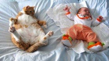 gatos 3.jpg
