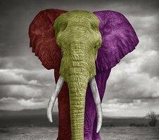 elefante-dumbo-republicano-manda-foto-suya-al-rey-juan-carlos-de-borbc3b3n-1320333000sy90a475h.jpg