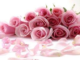 rosasrosas.jpg