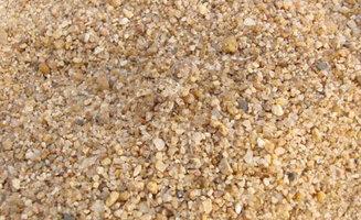 sand-spider.jpg