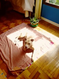 PicsArt_07-04-11.52.56.jpg