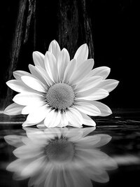 a13d66c3cb6901af406b14b7dbc73d17--ansel-adams-photography-reflection-photography.jpg
