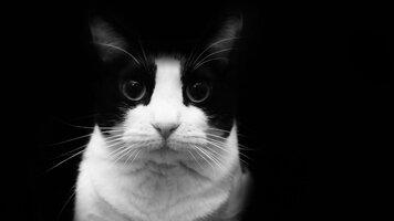 Gato-blanco-y-negro.jpg